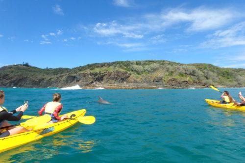 Kayak Tours